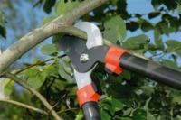 Pruning treeshears