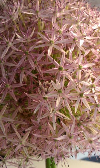 Amazing-Flower.jpg